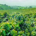 3 Destinations for a Coffee Plantation Vacation